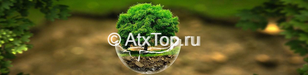 Озеленение территории участка