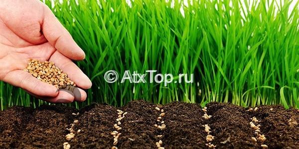 Устройство газона цена за квадратный метр